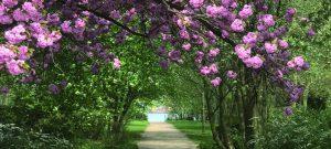 Slider Elsenhöhe Kirschblüte